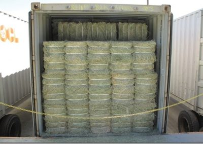 hay in containers[1]-min